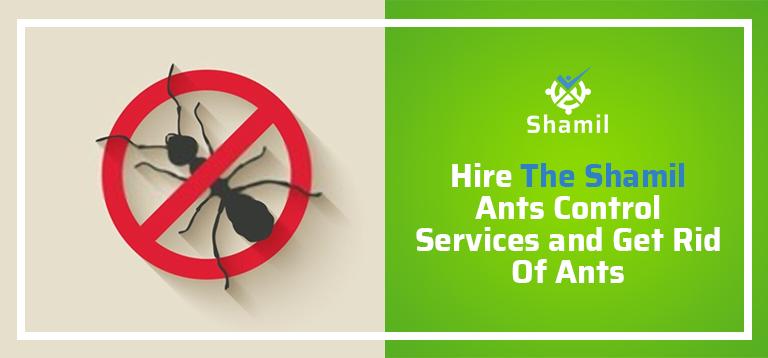 ant control services in dubai